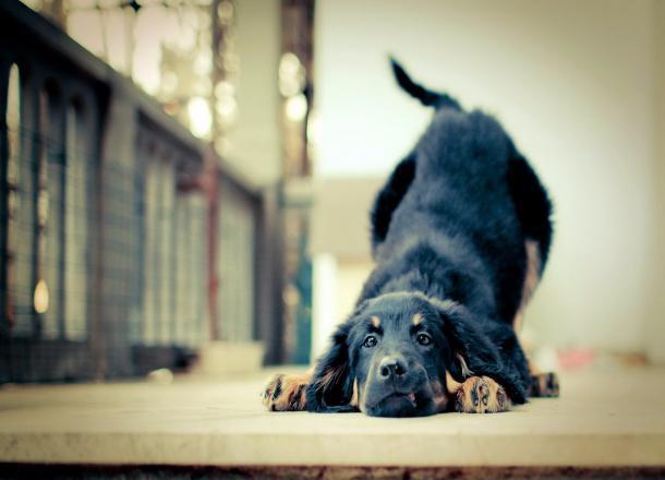 ВСочи пройдет выставка беспородных собак