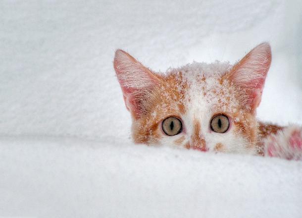Метеопредупреждение: вКраснодарском крае предполагается дождь, переходящий вмокрый снег