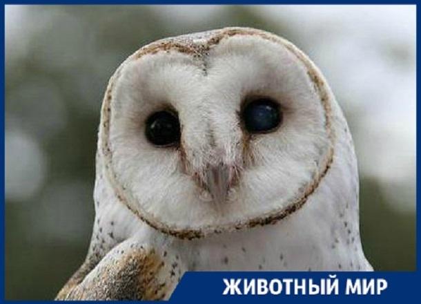 Спасенных в Санкт-Петербурге сипух доставят в Сочи