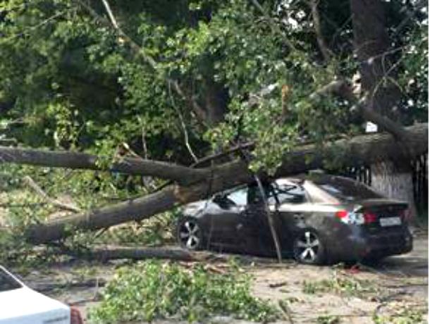 Беременная краснодарка пострадала в Ростове-на-Дону от рухнувшего на иномарку дерева