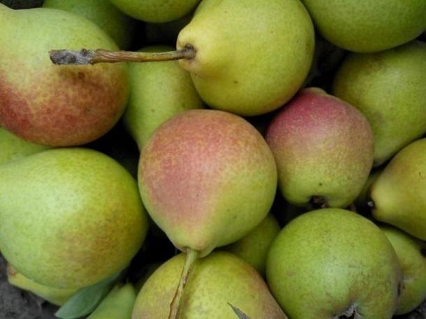 На Кубани построят фруктохранилище для 9 тысяч плодов
