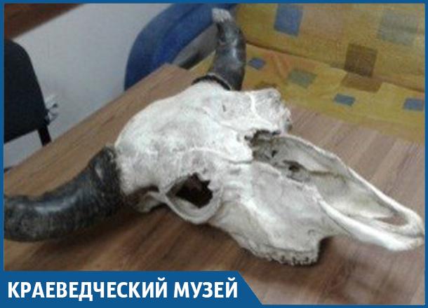 Череп крупного зубра нашли в Сочи