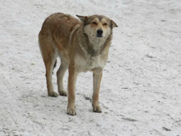 В Краснодаре бродячая собака спасла школьника от жуткой смерти: мальчика прищемило дверцами автобуса