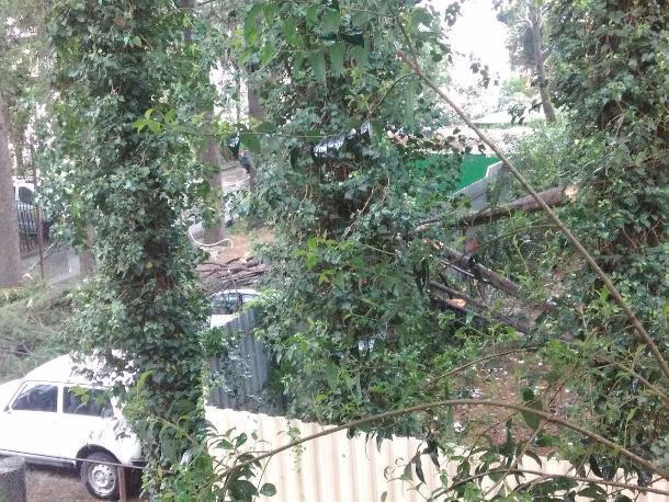 Ураганный ветер повалил деревья вСочи