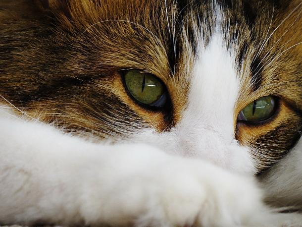 Краснодарец-живодер жестоко расправился с котом