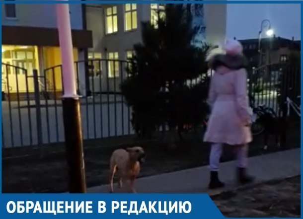 Бродячие собаки сделали домом краснодарскую школу и теперь терроризируют детей