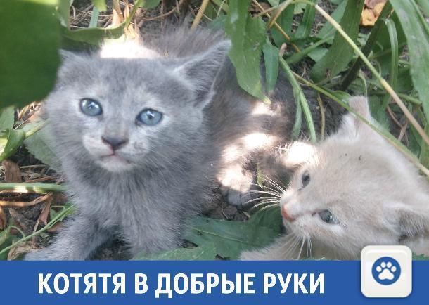 Милые котята ищут новый дом