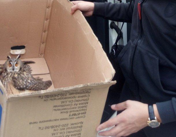 В Сочи местные жители спасли раненого совенка