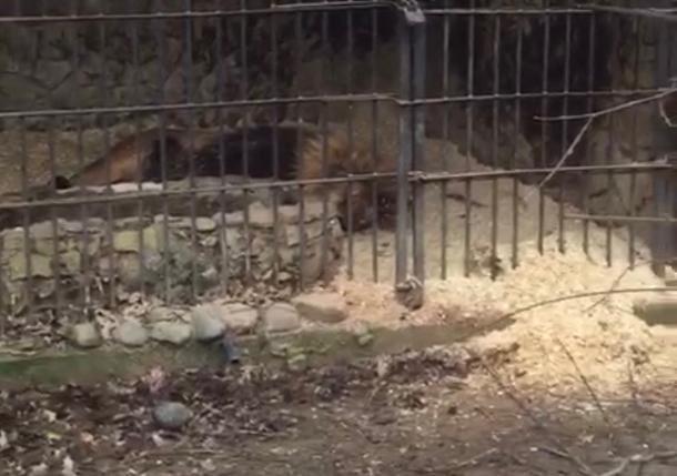 Краснодарцы предложили помощь Сафари-Парку по улучшению условий для животных