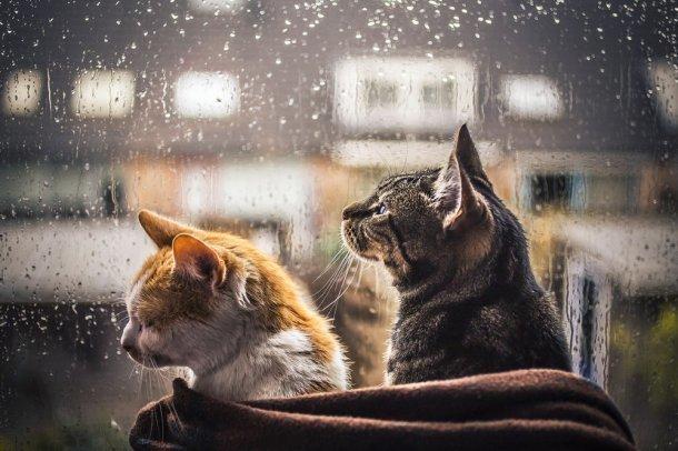 Дождь имокрый снег прогнозируют вКраснодарском крае