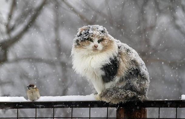 Краснодар ожидают мокрый снег и сильный гололед