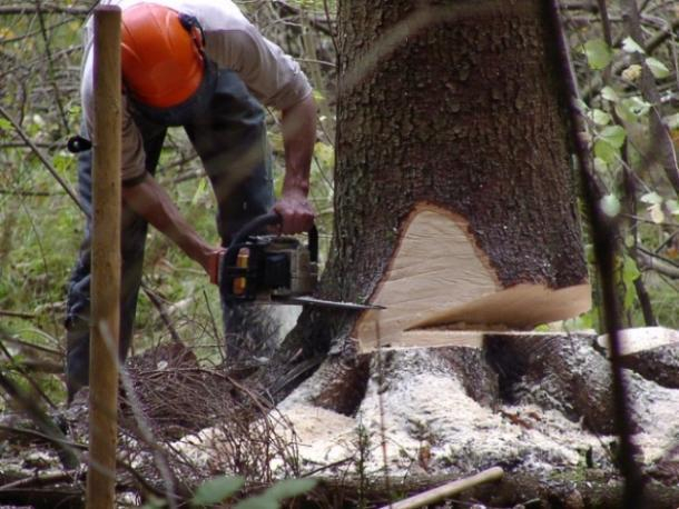 Черные лесорубы вырубили деревья в Апшеронском районе почти на 5 миллионов рублей
