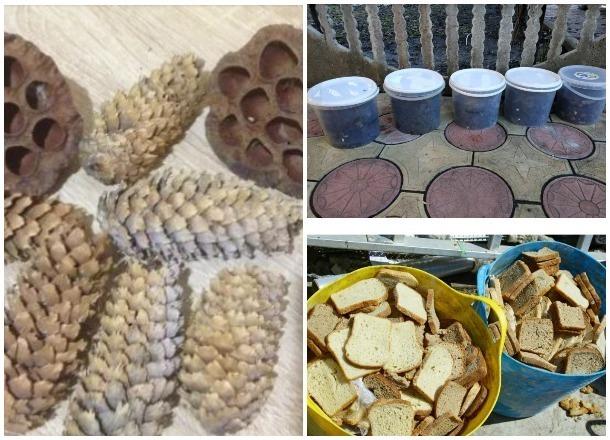 Собачьи фекалии, пищевые отходы, шишки: ТОП-5 причудливых объявлений о продаже в Краснодаре