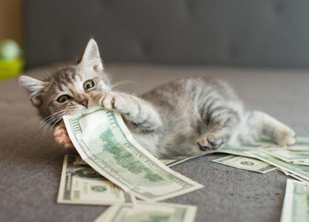 Зверье мое: Краснодар стал лидером по росту стоимости передержки кошек за год