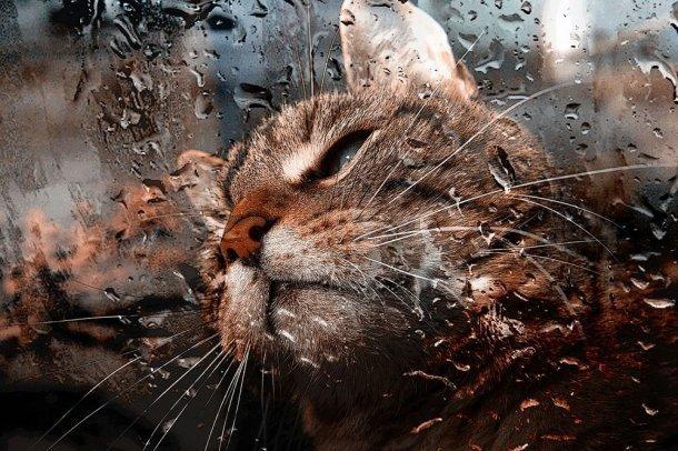 ВКраснодаре сегодня ожидаются дожди