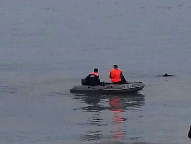 Двух дельфинят выбросило на берег в Новороссийске: один умер, второго реанимировали