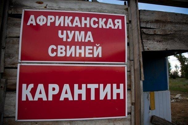 Вирус АЧС ликвидирован в 10-ти очагах наКубани