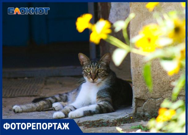 Кубанский Стамбул, или где в Краснодаре живут коты