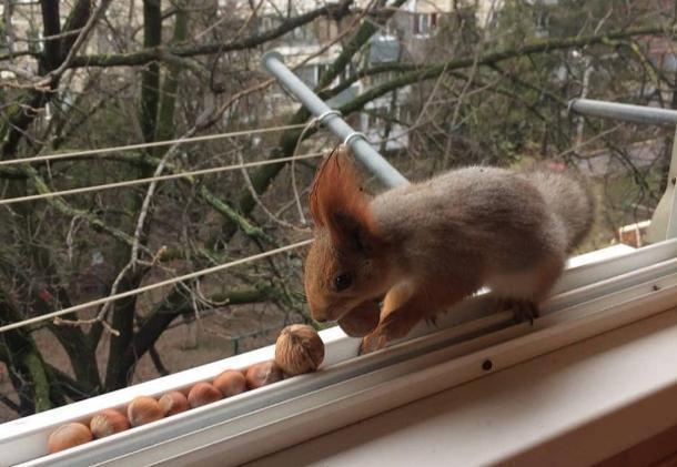 Ворующая орехи у краснодарки белка попала на видео