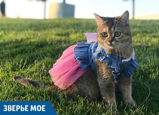 Кошка-блогерша покорила сердца краснодарцев