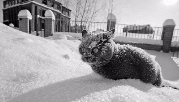 НаКубани ожидаются морозы под 30 градусов исильный ветер