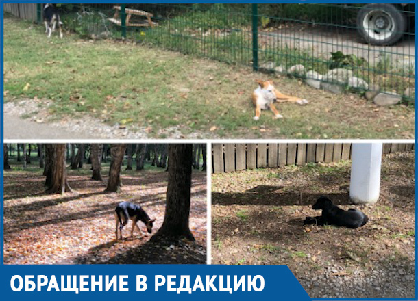 Собаки напали на маму с коляской в парке Краснодара