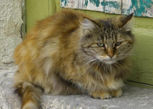 В Краснодаре женщина убила кота ударом о столб