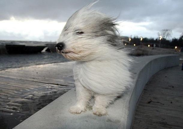 В Анапе ожидается сильный порывистый ветер