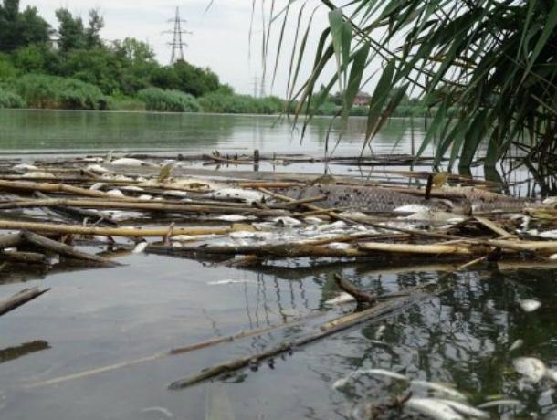 В Карасунах гибнет рыба из-за фекалий, - эксперты Краснодара