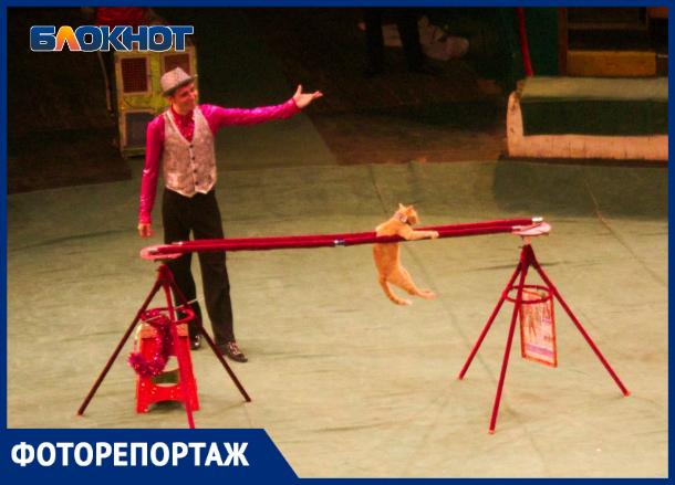 Отважные коты и «безумный» шляпник сорвали овации в краснодарском цирке