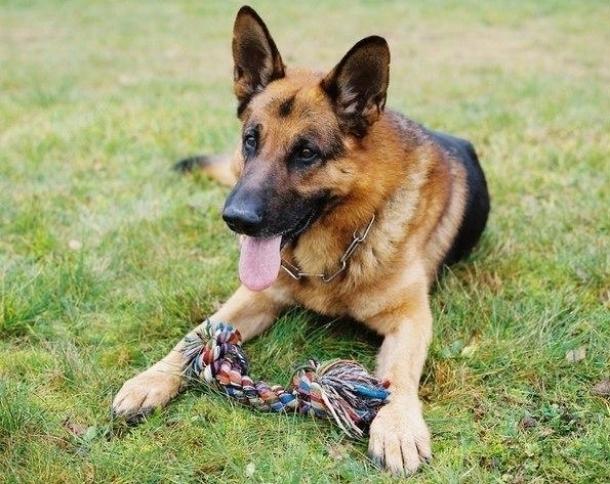 Кинолог в Новороссийске присвоила миллионы рублей, предназначенных на лечение собак