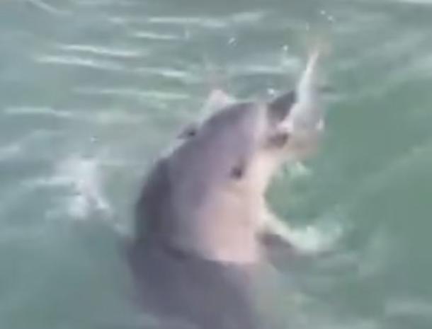 Дельфины устроили настоящее шоу за рыбу в Новороссийске