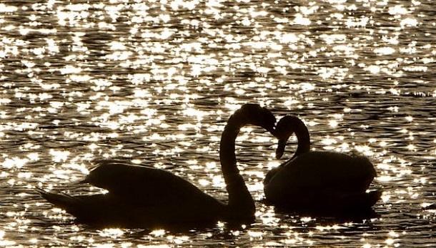 Вспышки гриппа птиц выявлены еще в 2-х районах Краснодарского края
