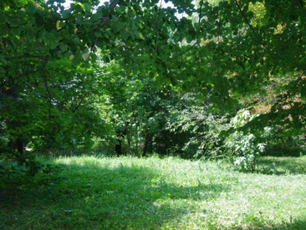 В Краснодаре разрешили строительство в зеленых зонах и поясах города