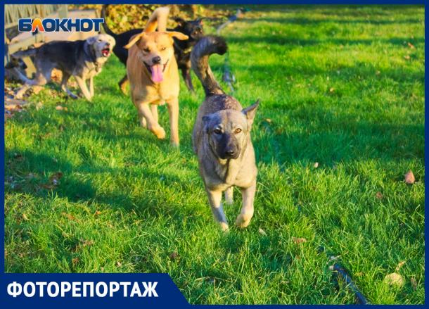 Сорвались с цепи: стая собак перепугала краснодарцев в Горсаду