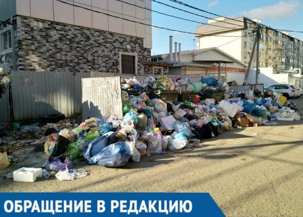 В горе мусора рядом с домами краснодарцев поселились крысы