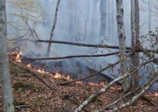 Три очага природного пожара локализовали в Северском районе