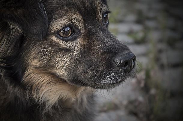 В Краснодаре неизвестный жестоко расстрелял собаку