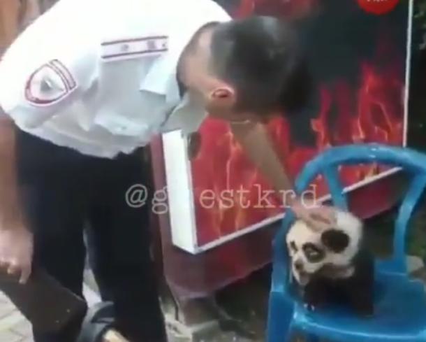 Сочинские предприниматели предлагают сфотографироваться с «нарисованной» пандой и полумертвым львенком