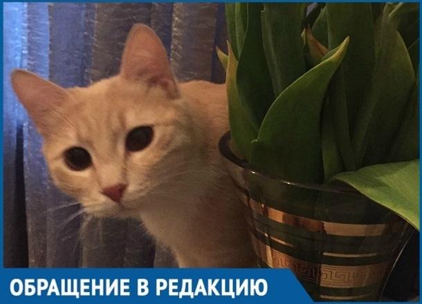 Спецслужбы Кубани отказали сочинке в спасении кота