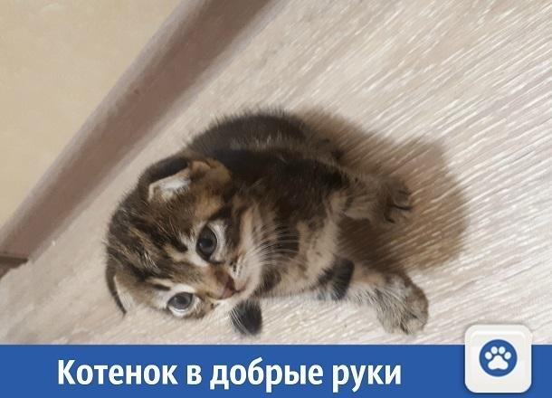 Милый котенок ищет дом