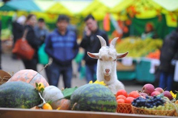 Количество ярмарок выходного дня на Кубани выросло до 70