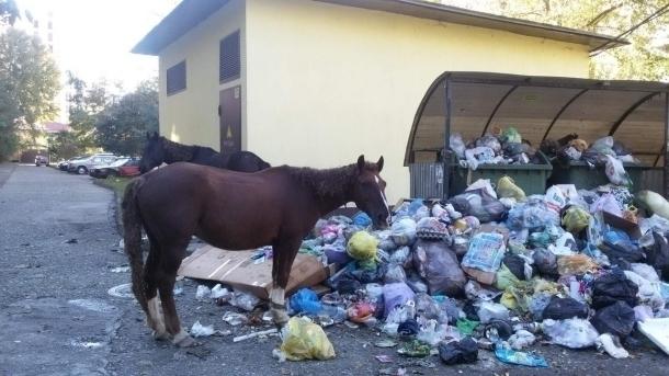 Лошади в Сочи кормятся на помойках