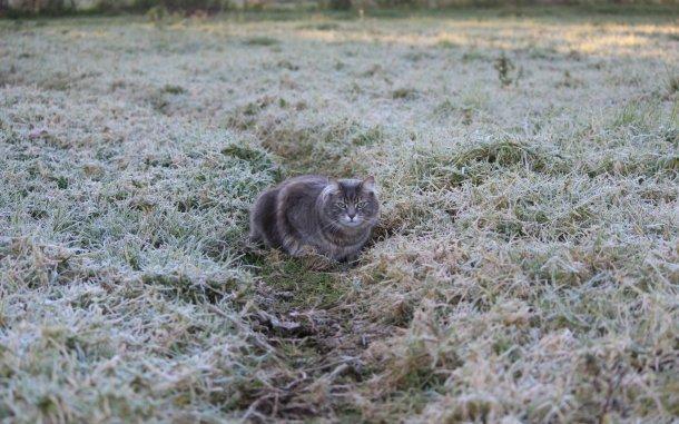 ВКраснодарском крае объявили экстренное предупреждение из-за заморозков