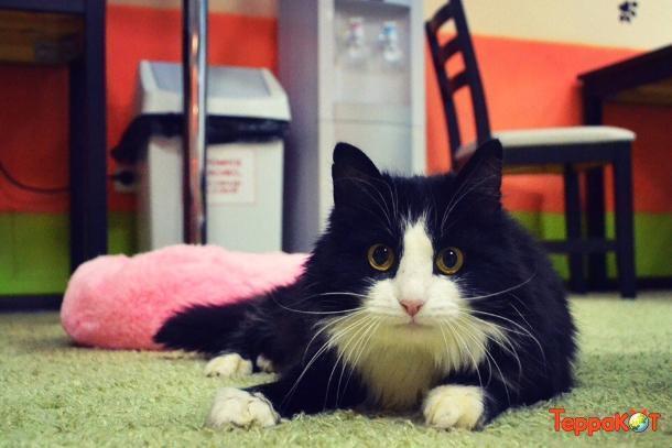 Зверье мое: хотели усыпить в Астрахани, но спасли в Краснодаре кошку с пулей под сердцем