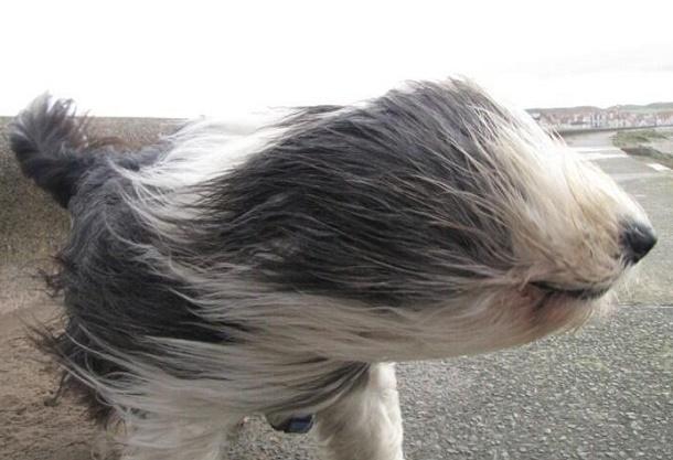ВАнапе объявлено экстренное предупреждение из-за сильных ливней