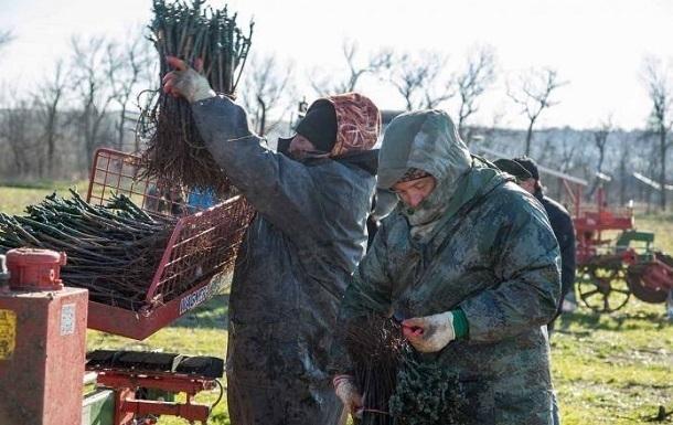 В развитие виноградорства в Анапе инвестировали 200 млн рублей