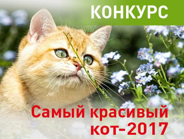 «Блокнот Краснодара» запускает конкурс «Самый красивый кот-2017»