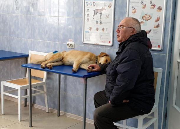«Пока зовем Малышом»: краснодарский пенсионер рассказал о спасении раненого бездомного пса