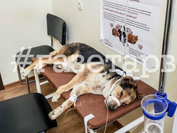 Под Краснодаром живодер до смерти забил своего пса ногами